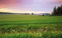A pasture in the countryside in Finland