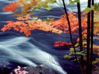 Windows 8 Wallpapers - Autumn 1600x1200 (19)