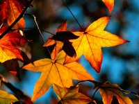 Windows 8 Wallpapers - Autumn 1600x1200 (72)