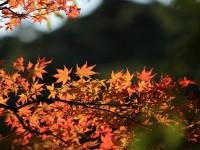 Windows 8 Wallpapers - Autumn 1600x1200 (8)