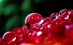 Extraordinary Waterdrops Wallpapers 1920×1200