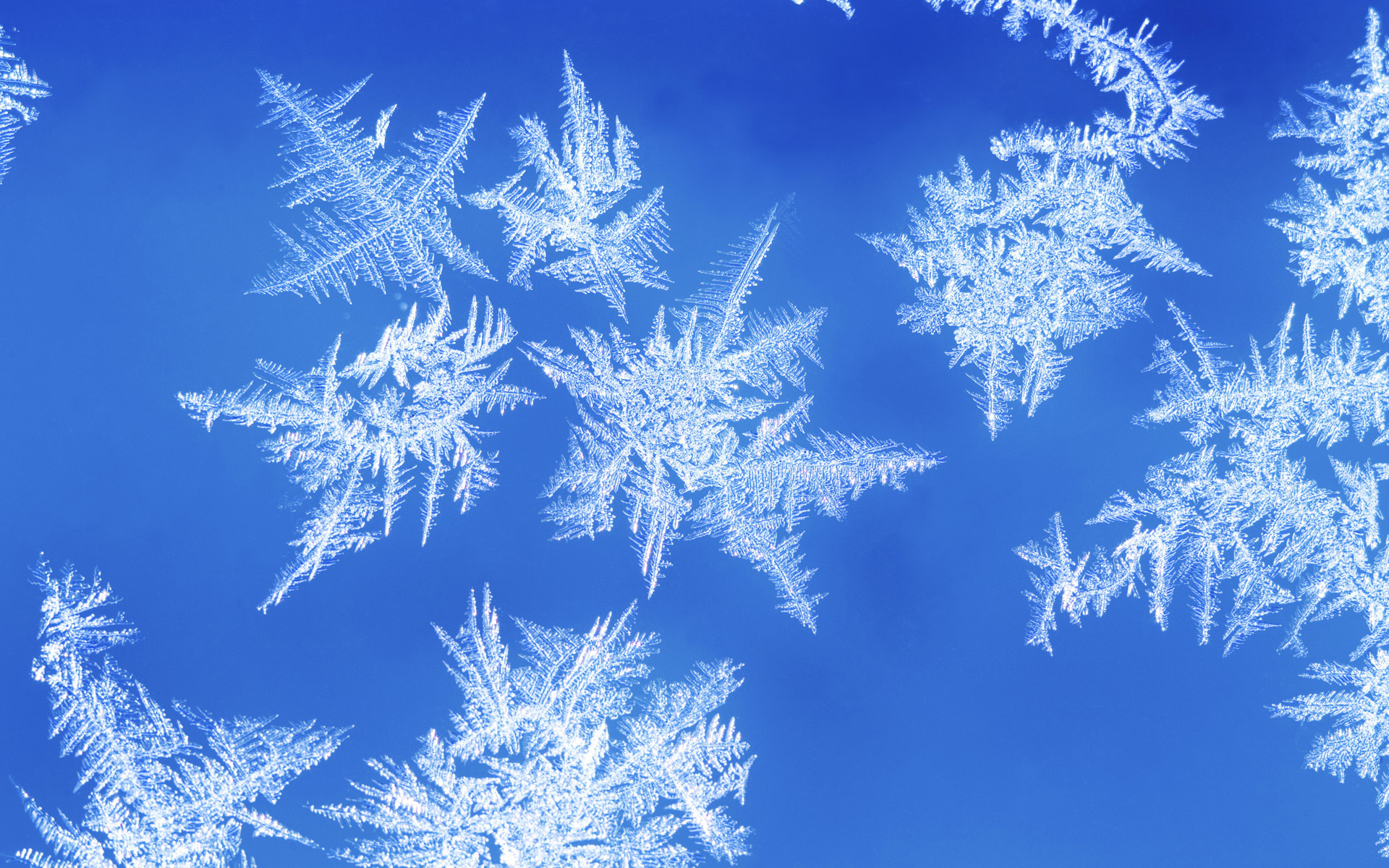 real snowflakes background - photo #7