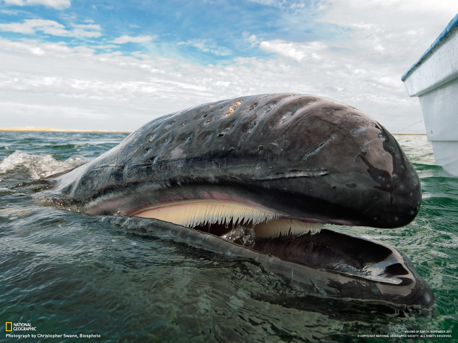 Whales - Nat Geo HD wallpaper