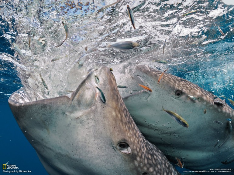 National Geographic HD Wallpapers