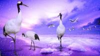 birds stork