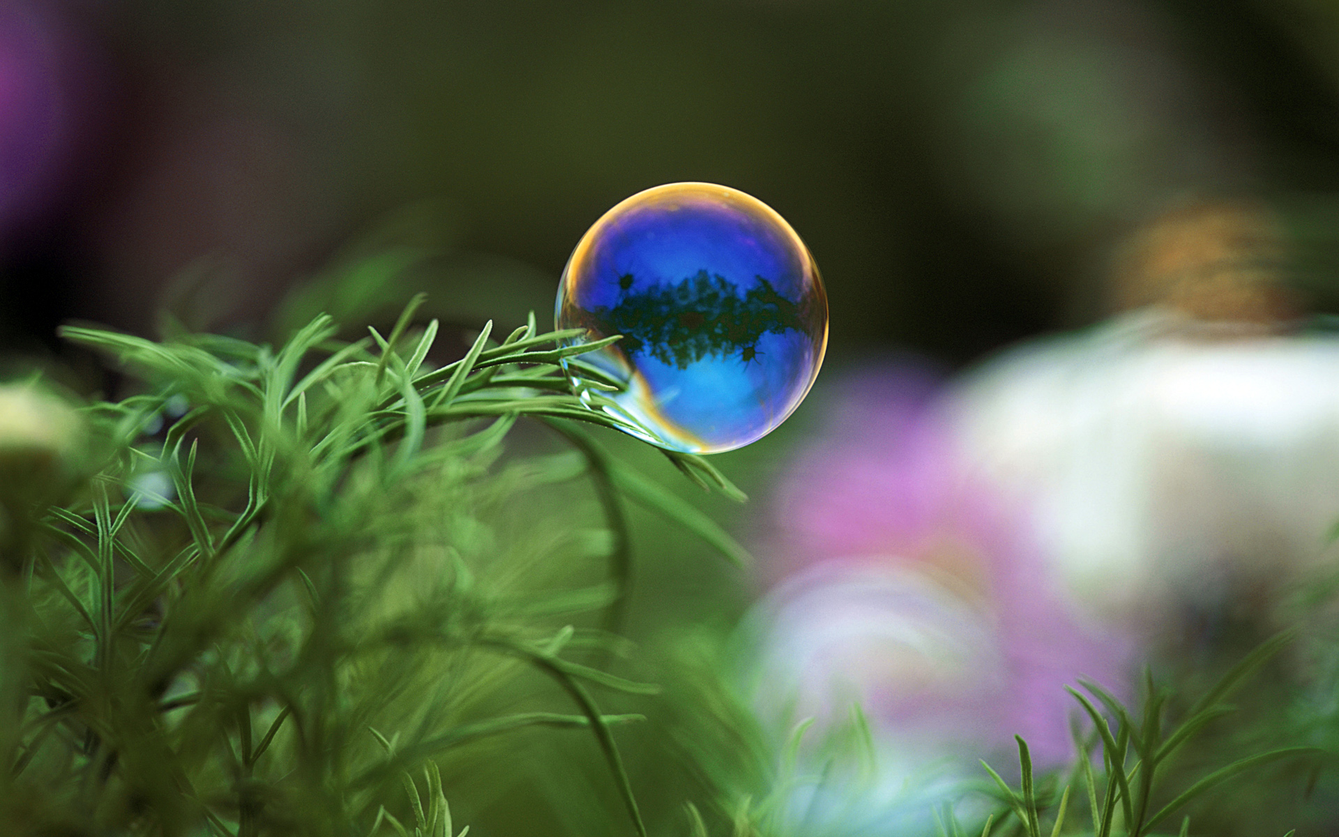 Soap Bubbles Wallpapers 1920x1200 Hd Wallpapers