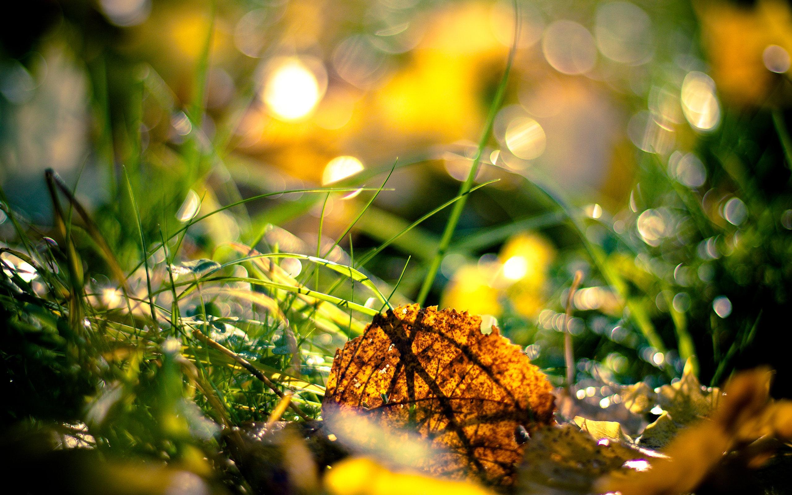 Трава осенью