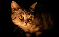 cat in dark