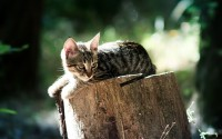 cat on a trunk