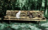 park banch