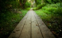 trail of planks