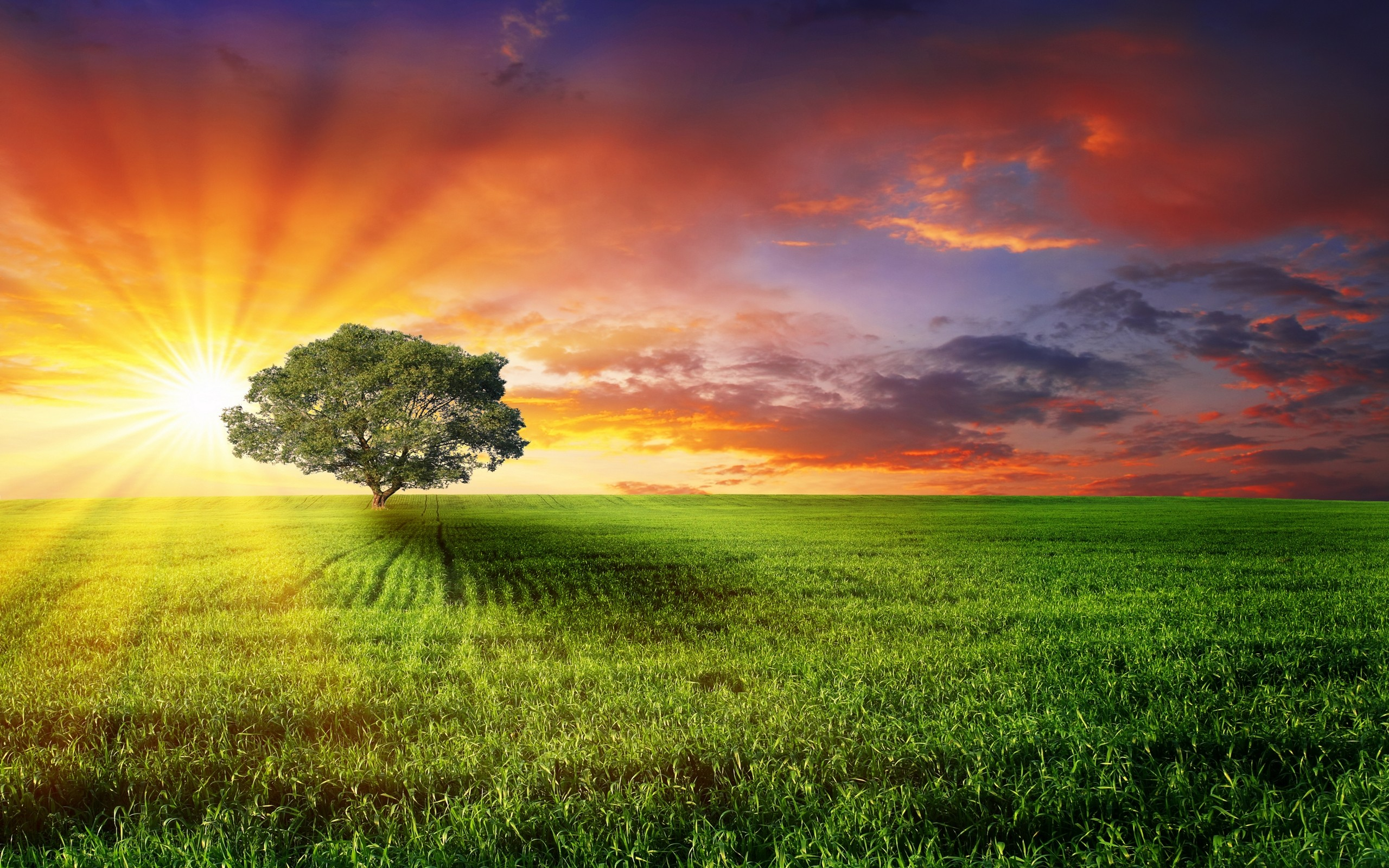 Daily Featured Wallpaper Sunset Bliss Tree At Sunset