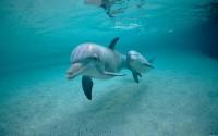 dolphin underwawter