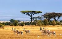 savanna africa
