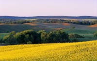 Farmland with canola in foreground, Tiger Hills, Manitoba, Canada
