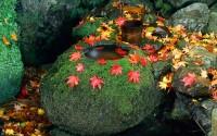 A tsukubai stone basin in an autumn garden in Kyoto, Japan