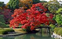 Japanese Acer and Bonsai in Rikugien Garden, Bunky?-ku, Tokyo, Japan
