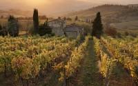 Farmhouse in  vineyard at sunset, Panzano, Chianti, Tuscany, Italy