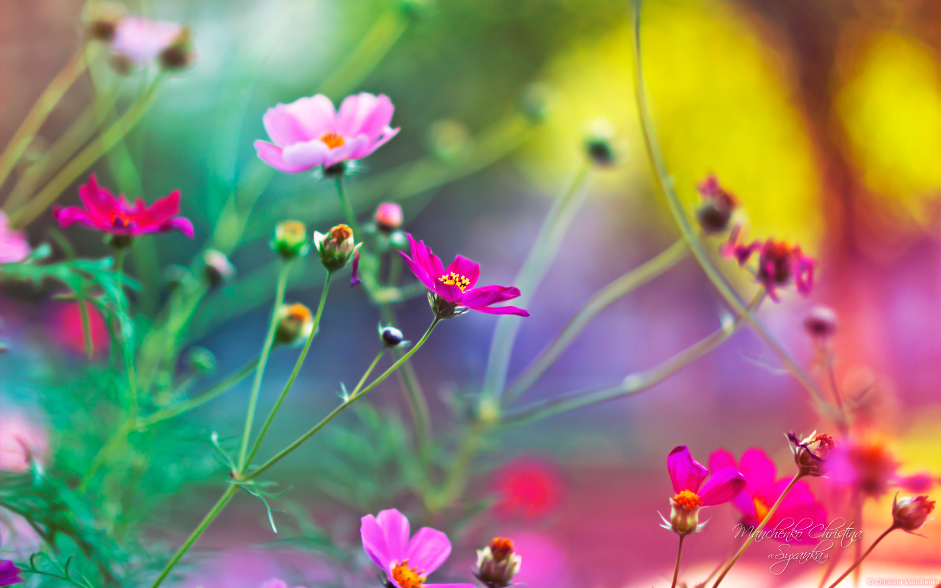 flowers archives hd wallpapers