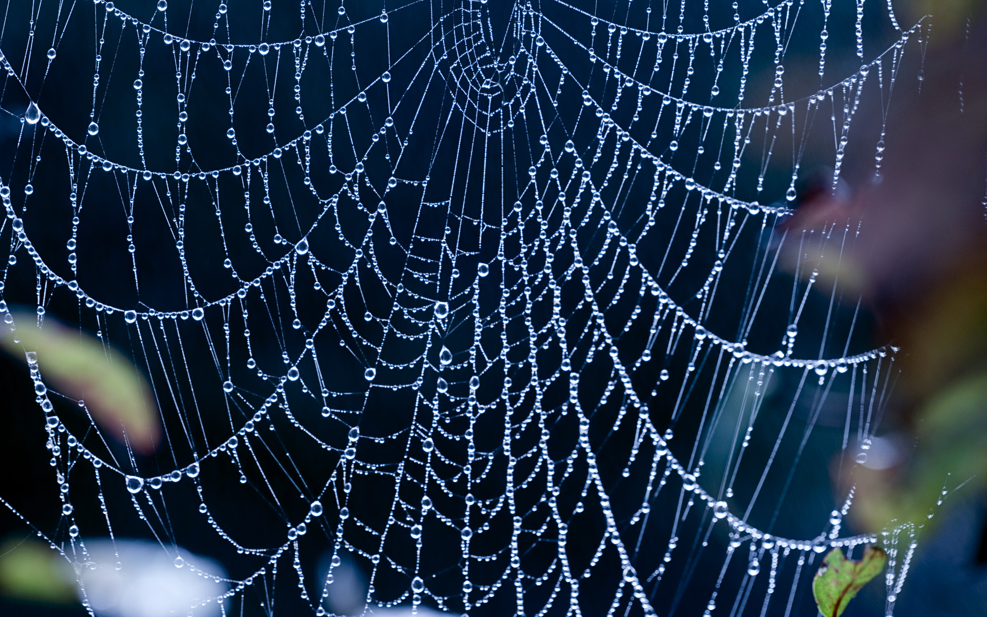 17 Incredible spiderweb wallpapers with water drops and ...