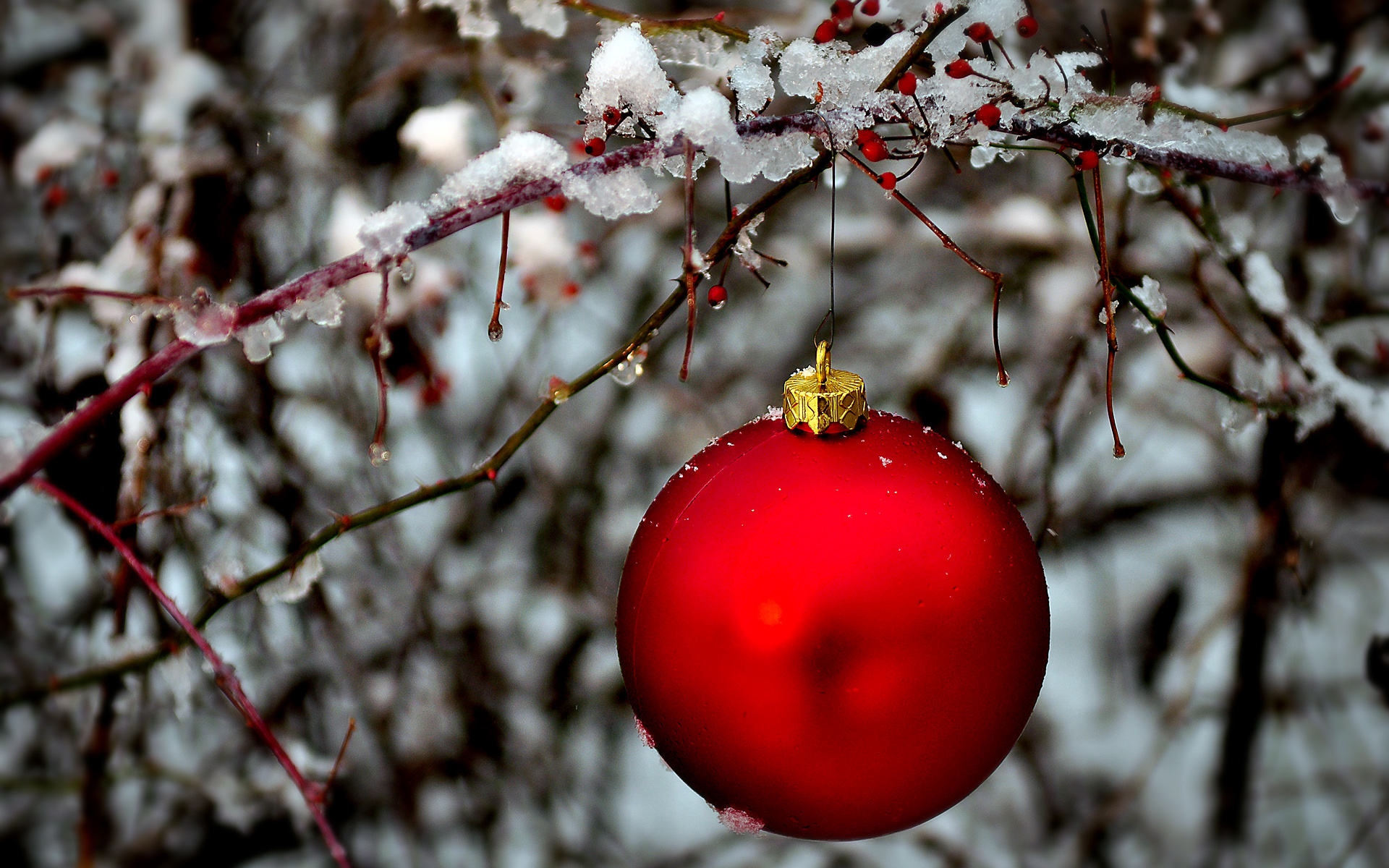 Red holiday ornament hanging in a snow covered bush ...