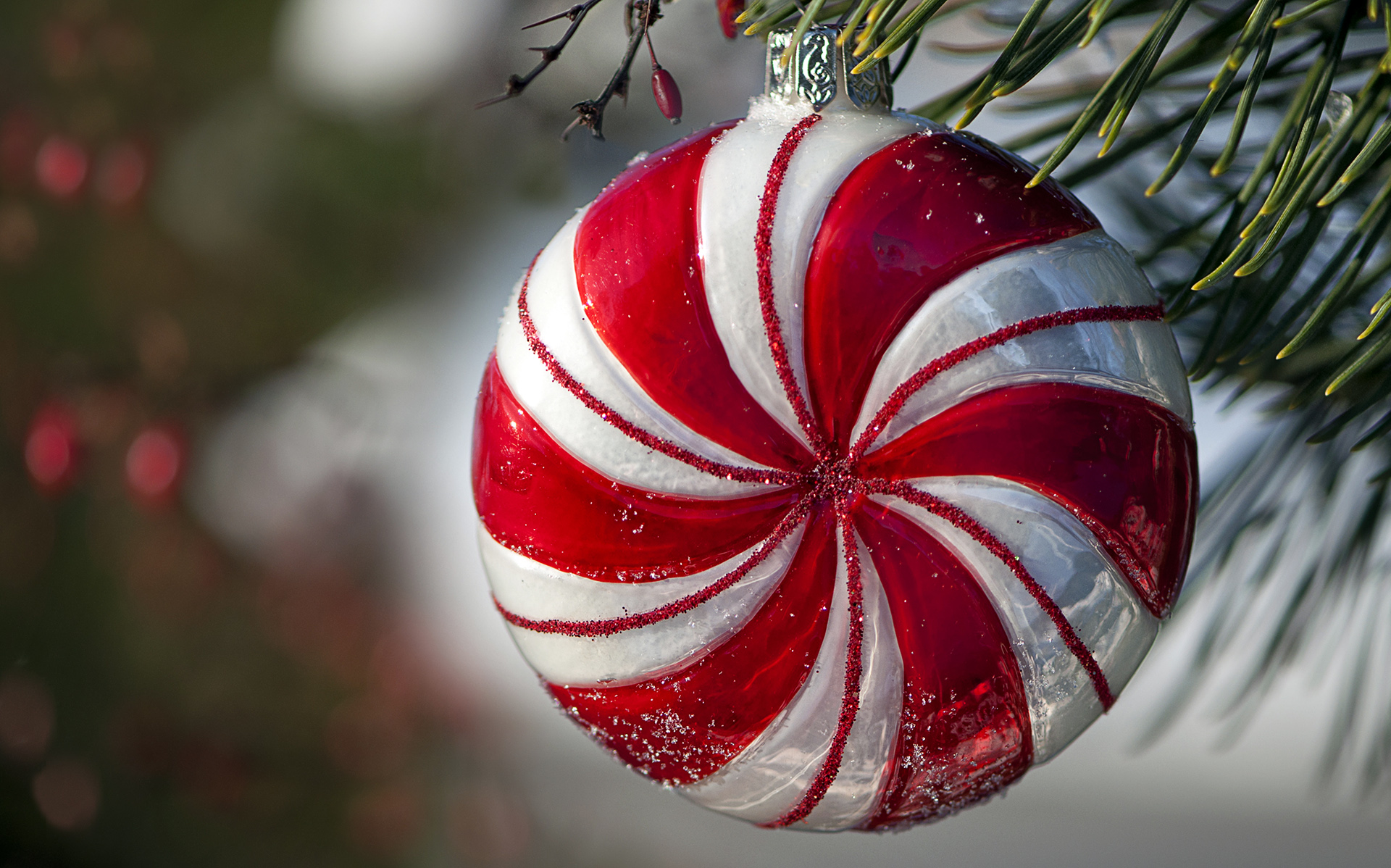 Peppermint ornament hanging in pine tree | HD Wallpapers