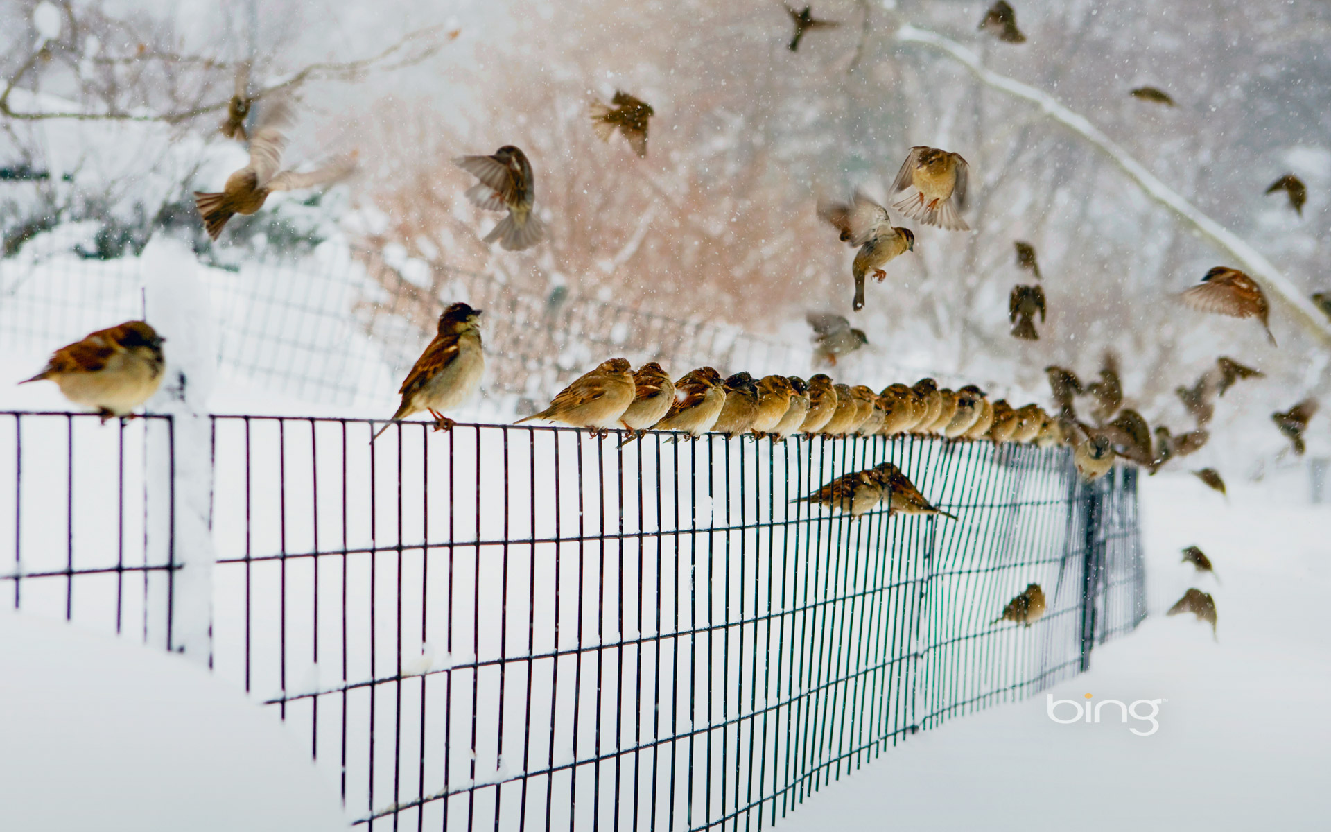 <b>birds</b> Archives | HD <b>Wallpapers</b>