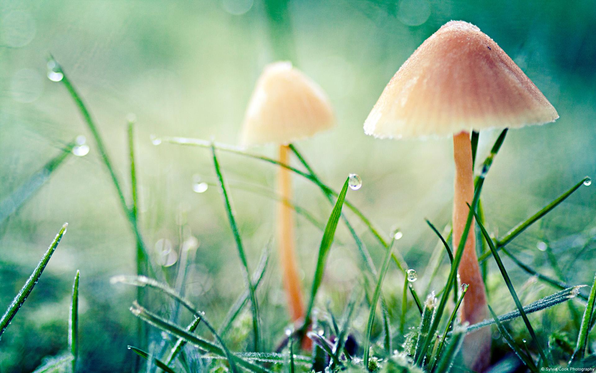 mushroom wallpaper phone - photo #13