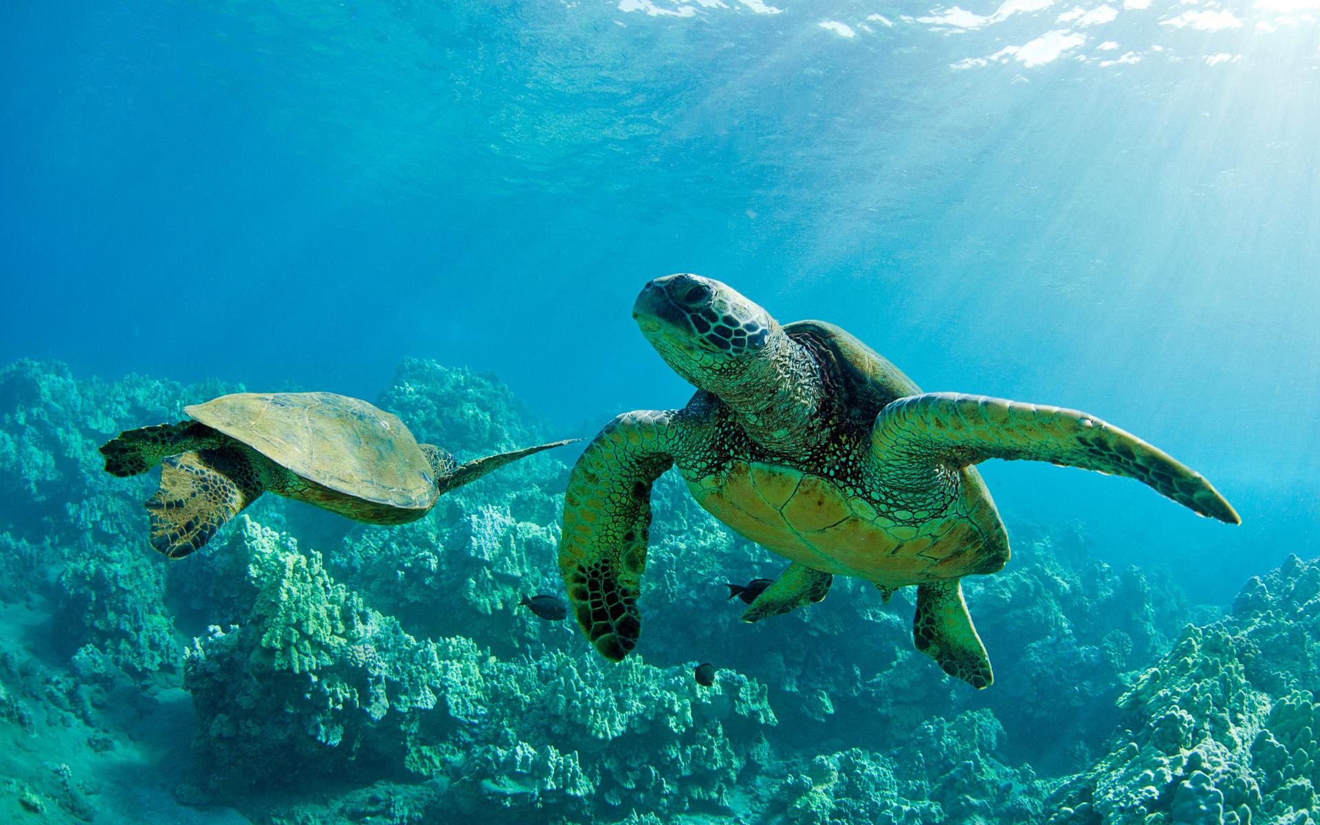Turtle  Wikipedia