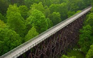 wooden bridge over forest
