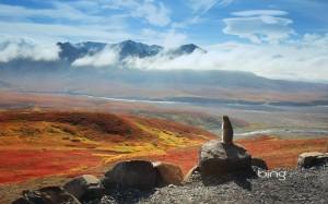 Arctic ground squirrel, Alaska