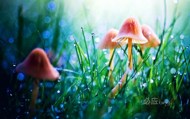 mushroom in grass wallpaper