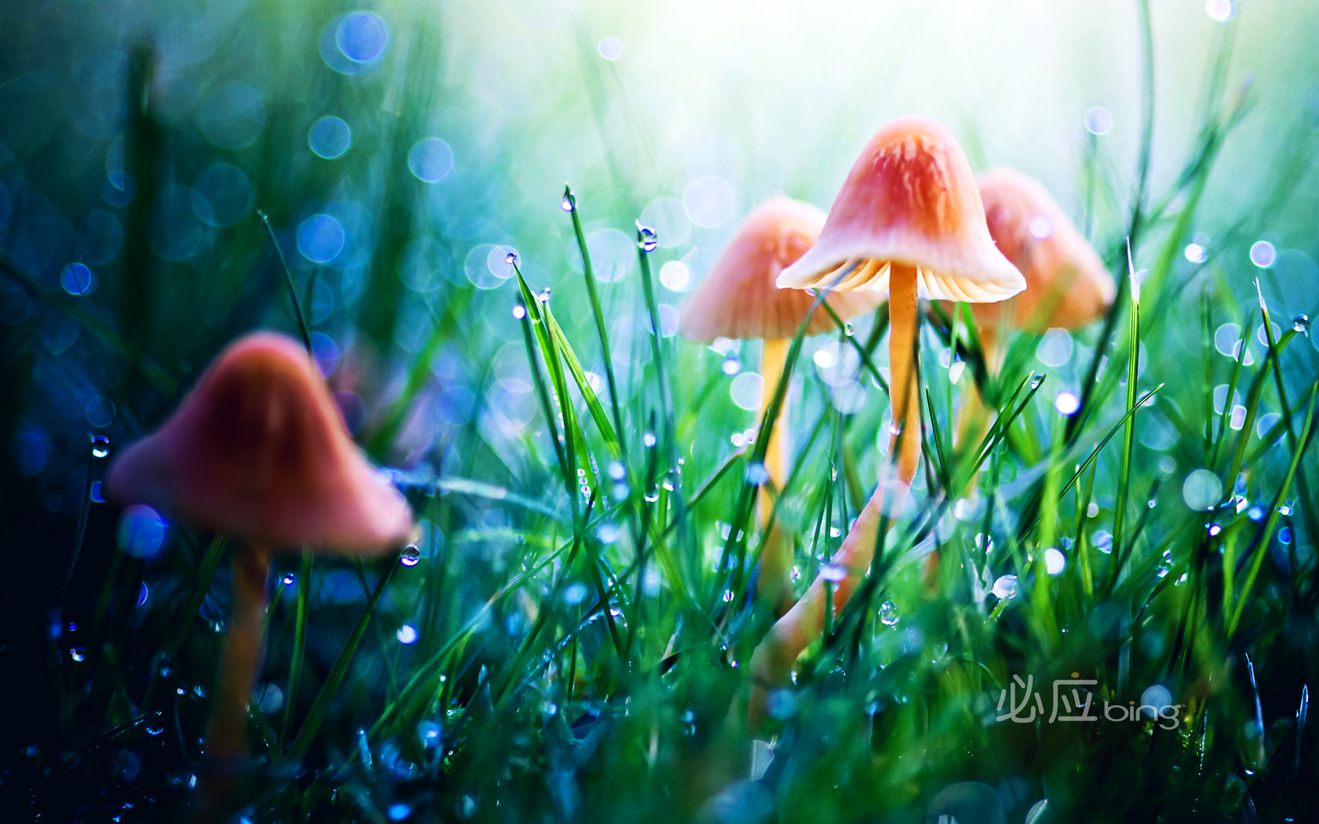 mushroom in grass wallpaper