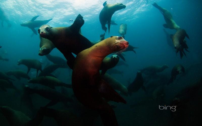 sea lions off anacapa island