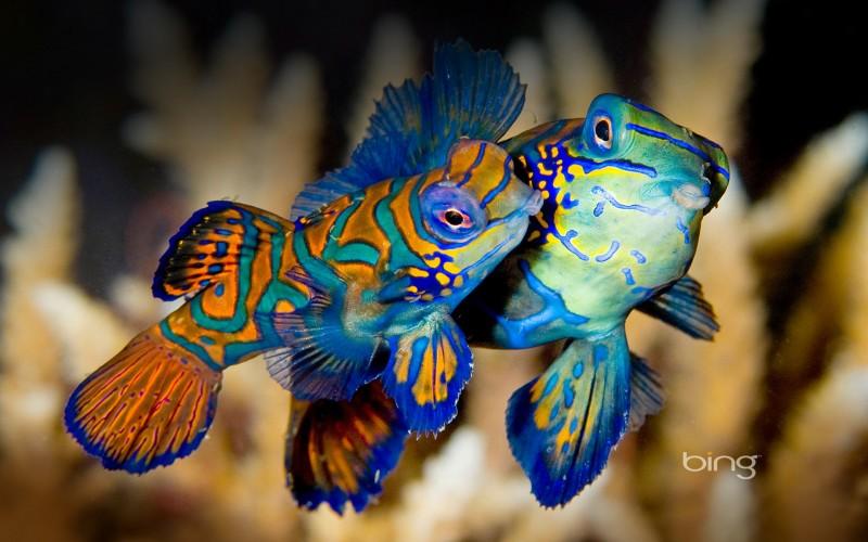 colorful frog fish wallpaper