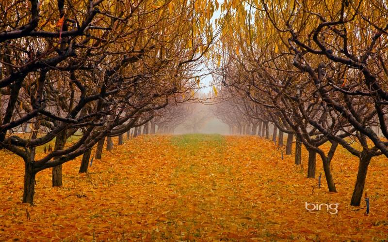 Bing wallpaper pack 1920x1200 week 38 hd wallpapers - Descargar autumn leaves ...