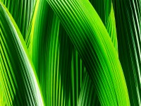 iOS7 wallpapers for android