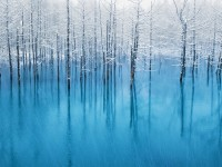 frozen trees iOS 7 wallpaper