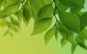 windows 8 hq wallpapers