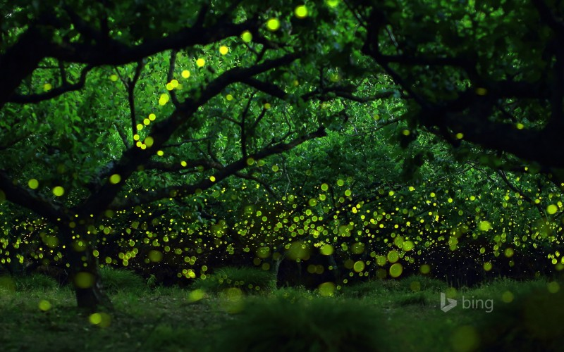long-exposure photograph of fireflies