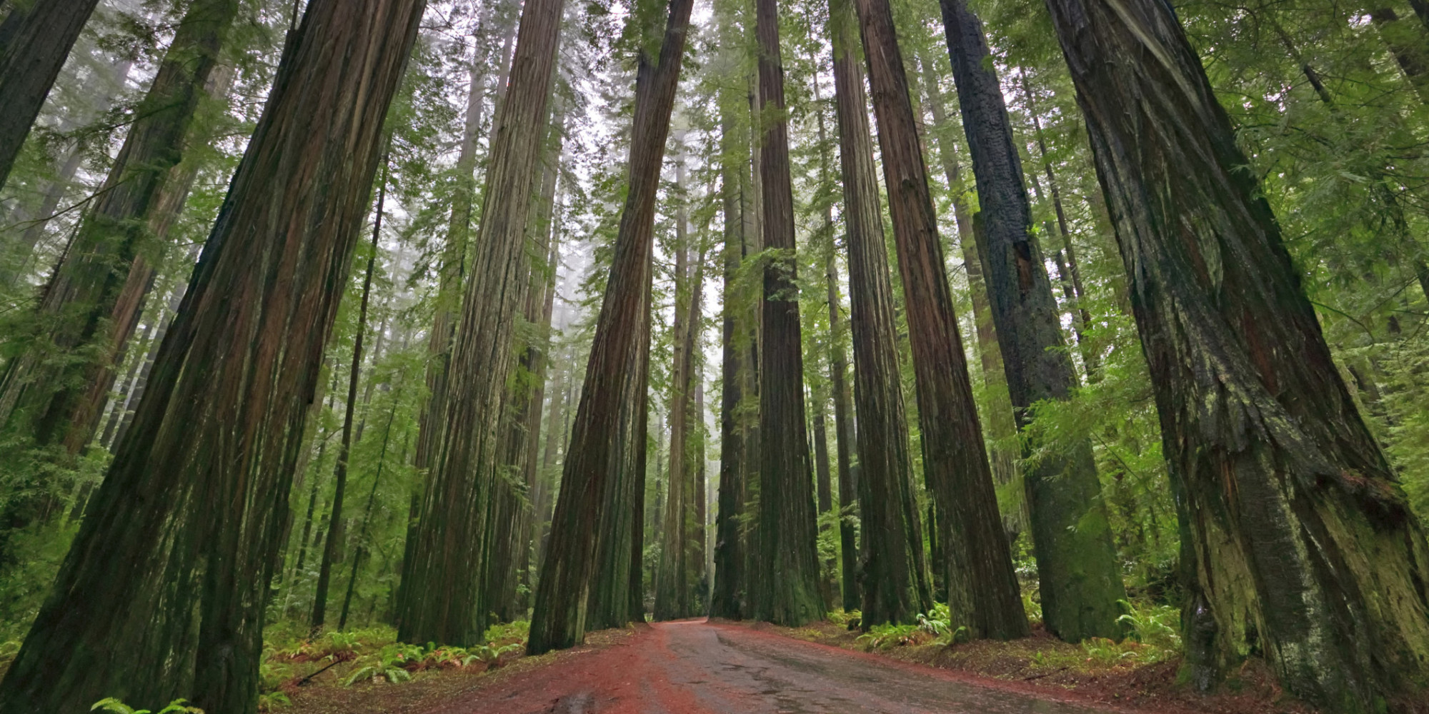 5 Amazing Hd Wallpapers Of Redwood Forests To Calm Your