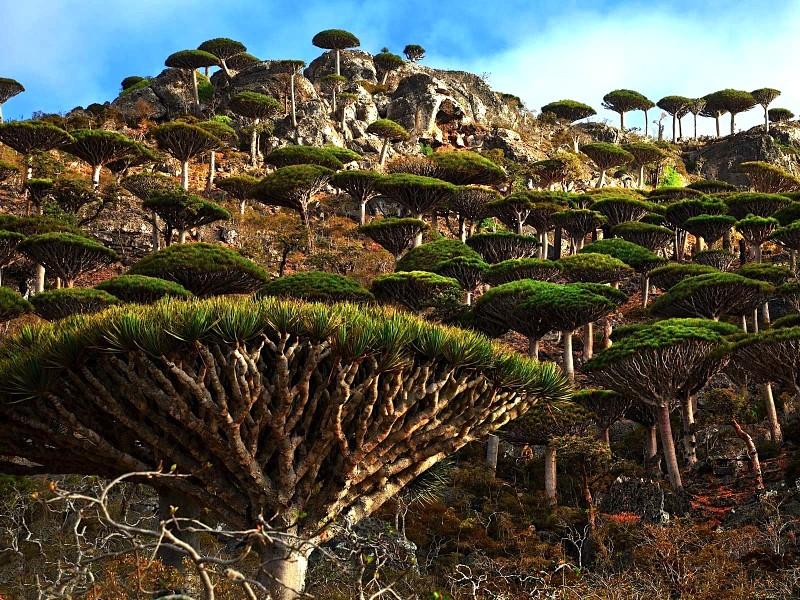 Socotra Island HD wallpapers