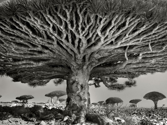 10 HD wallpapers of Socotra Island, alien world here on Earth