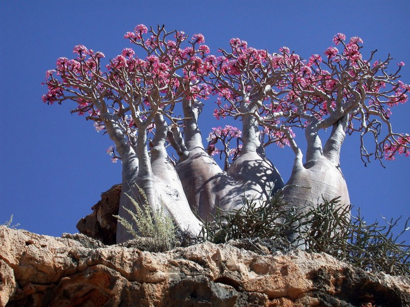 Socotra Island HD wallpapers